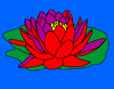 Disegno Nymphaea pitturato su IRENE