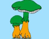 Disegno Funghi pitturato su Luca