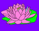 Disegno Nymphaea pitturato su matilde