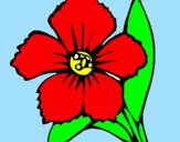 Disegno Fiore  pitturato su mariapia