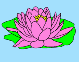 Disegno Nymphaea pitturato su fiore e  sindi