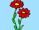 Disegno Margherite  pitturato su mariapia
