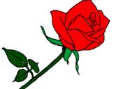 Disegno Rosa  pitturato su Beatrice