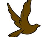 Disegno Colomba della pace in volo pitturato su joma