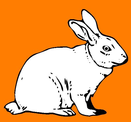 Disegno lepre colorato da utente non registrato il 25 di for Lepre disegno da colorare