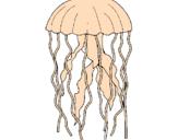 Disegno Medusa  pitturato su riccardo