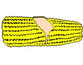 Disegno Pannocchia di mais  pitturato su raisa