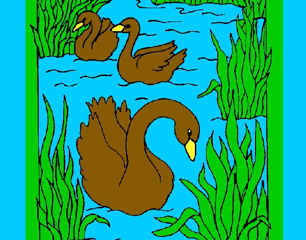Disegno giorno dei cigni sul lago colorato da alessandro for Disegni casa sul lago