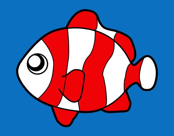Disegno pesci pagliaccio colorato da mattia08 il 05 di for Immagini da colorare di pesci