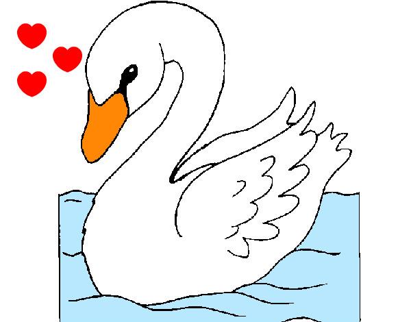 Disegno il cigno bianco colorato da pippy il 12 di aprile for Animali da stagno