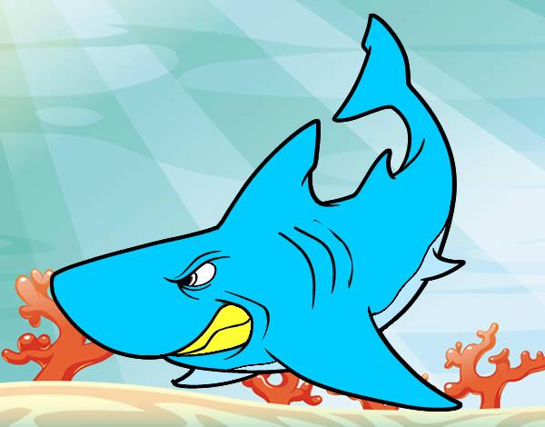 Q Significa Shark Disegno leo squagliato...