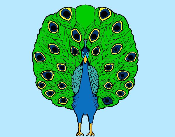 Disegno pavone colorato da bianca03 il 29 di agosto del 2012 - Immagini pavone a colori ...