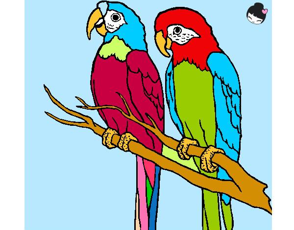 Disegno pappagalli tropicali colorato da lau452000 il 15 - Immagini di marmellata di animali a colori ...