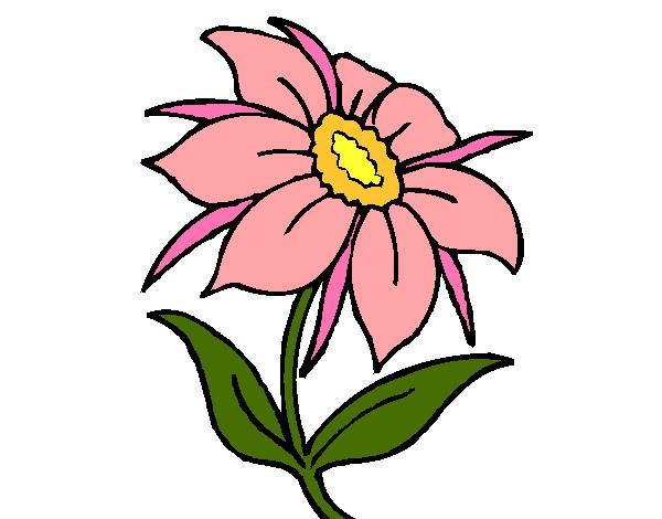 Disegno fiore selvatico colorato da samell il 29 di for Fiori stilizzati colorati