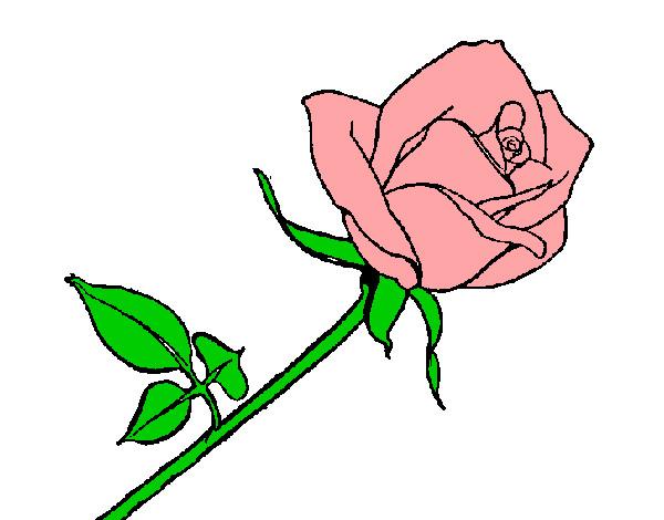 Disegno Di Rosa Con Foglie Da Colorare Acolore Com: Disegno Rosa Colorato Da Samell Il 29 Di Ottobre Del 2012