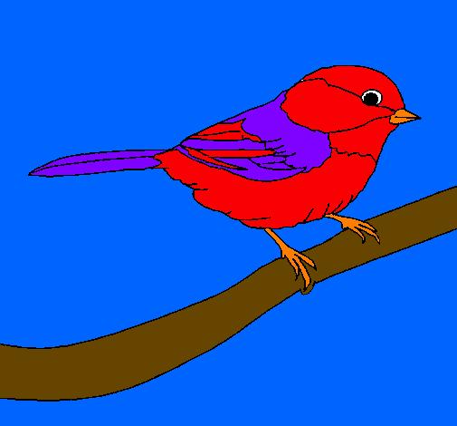 Disegno uccellino colorato da utente non registrato il 01 for Uccellino disegno