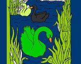 Disegno Cigni  pitturato su GABRIEL17