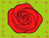 Fiore di rosa