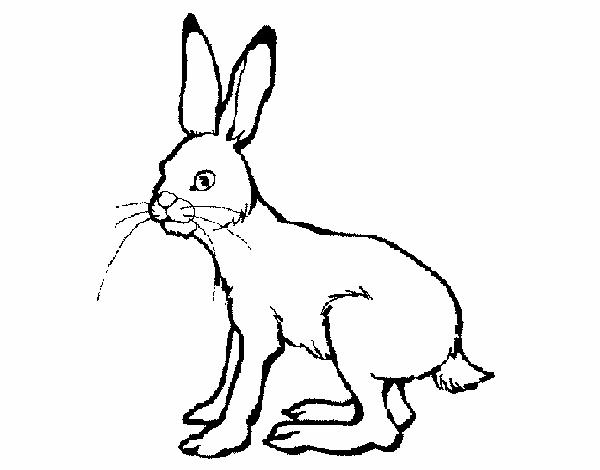 Disegno lepre colorato da utente non registrato il 27 di for Lepre disegno da colorare