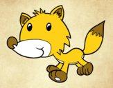 Coyote bebè
