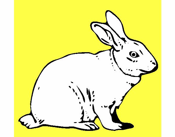 Disegno lepre colorato da utente non registrato il 12 di for Lepre disegno da colorare