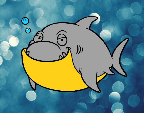 Disegno grande squalo bianco colorato da utente non for Squalo bianco da colorare