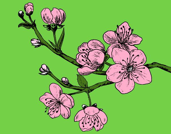Disegno ramo di ciliegio colorato da utente non registrato for Fiori stilizzati colorati