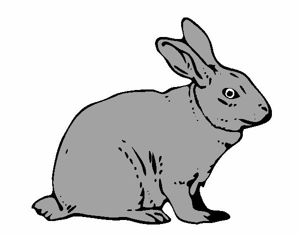 Disegno lepre colorato da utente non registrato il 24 di for Lepre disegno da colorare