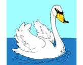 Disegno Cigno nell'acqua  pitturato su Achille