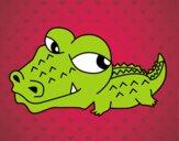 Coccodrillo piccolo