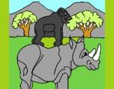 Rinoceronte e scimmietta