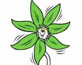 Fiore  2a