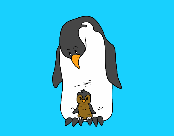 Disegno pinguino con il suo bambino colorato da utente non for Disegno pinguino colorato