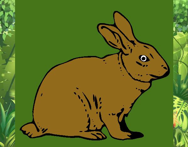 Disegno lepre colorato da utente non registrato il 07 di for Lepre disegno da colorare