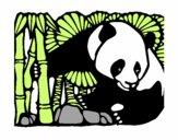 Orso panda con bambù