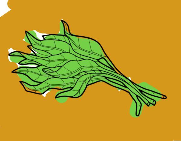 Disegno mazzo di spinaci colorato da utente non registrato for Disegni del mazzo del cortile