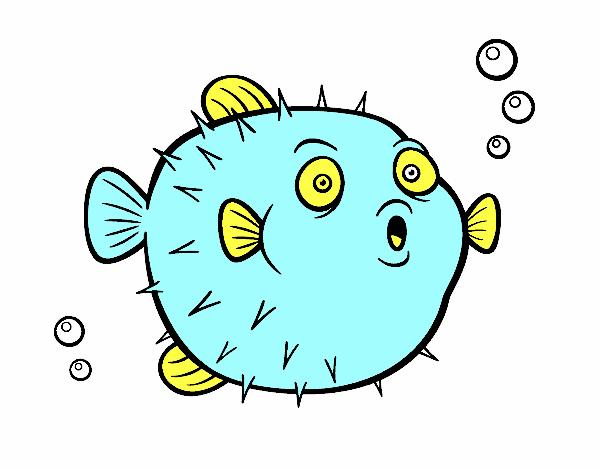 Disegno pesci palla colorato da utente non registrato il for Disegno pesce palla