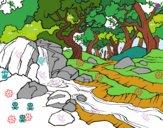 Paesaggio della foresta con un fiume