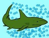 Un squalo nuoto