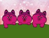 3 cuccioli