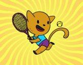 Gatto tenis