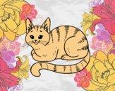 Giovane gatto
