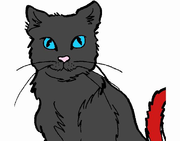 Disegno gatto colorato da utente non registrato il 18 di - Immagine del gatto a colori ...