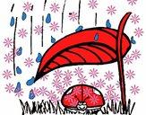 Coccinella protetta dalla pioggia