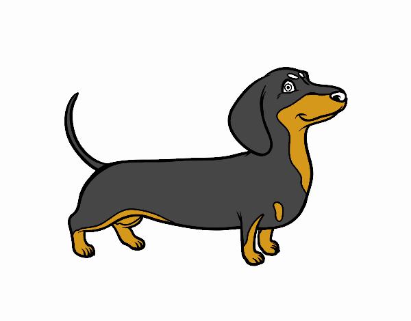 Disegno cane bassotto colorato da utente non registrato il for Bassotto cane