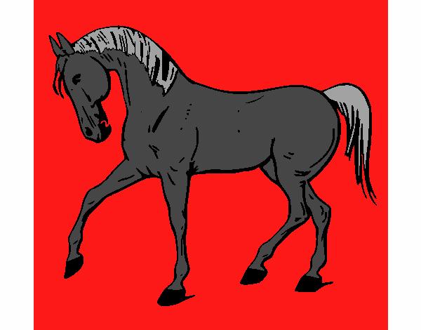 Disegno Cavallo Con La Zampa Alzata Colorato Da Utente Non