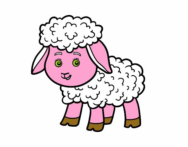 Piccolo pecora