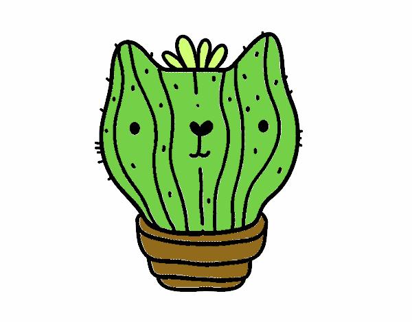 Cactus gatto