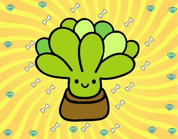 Mini succulente