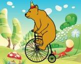 Orso in bicicletta